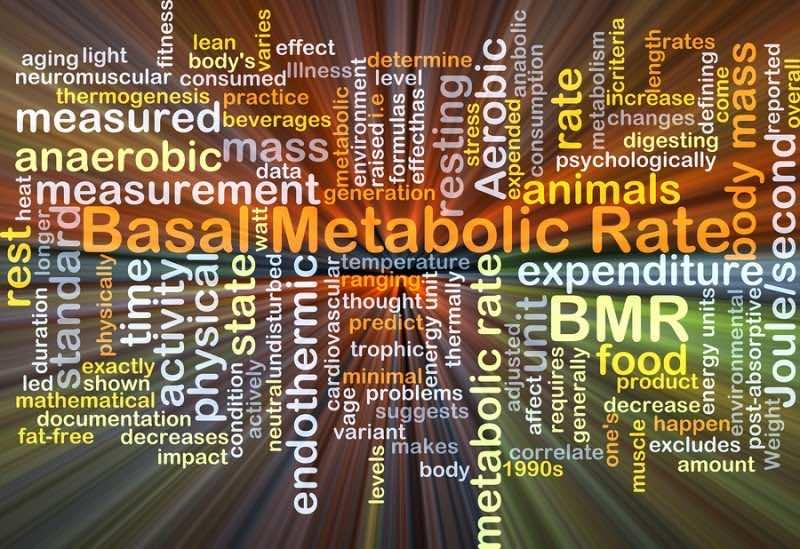 Increase Metabolism Naturally - wordcloud illustration of basal metabolic rate