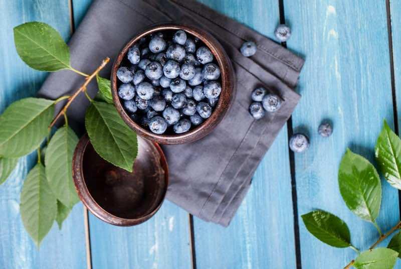 Freshly picked blueberries in metal bowl. Juicy and fresh bluebe