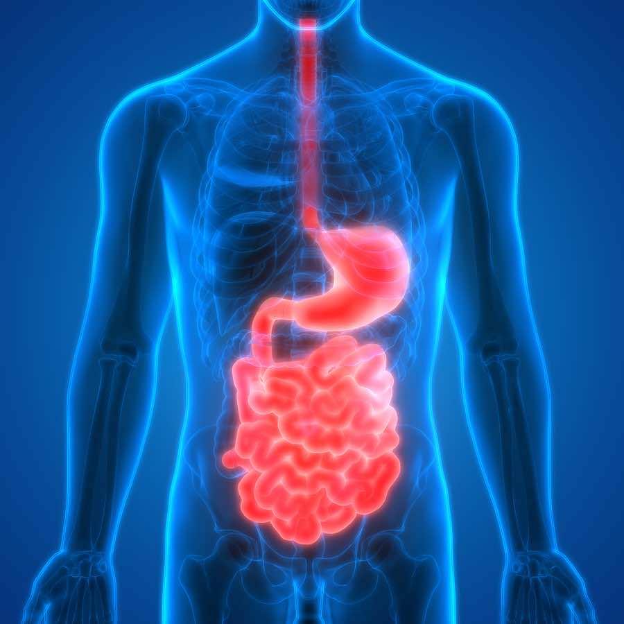 Good general probiotics