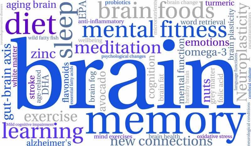 Brain Word Cloud