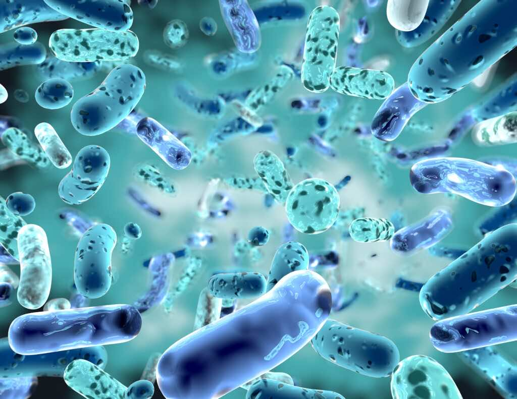 probiotics for gut health how