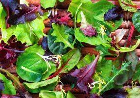 Close up of a variety of salad greens