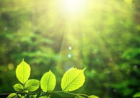 forest trees leaf. nature green wood sunlight backgrounds.