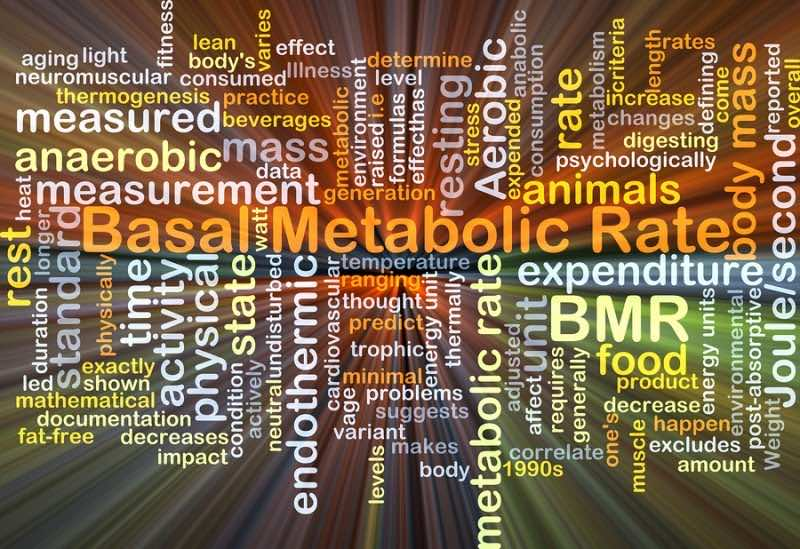 Increase Metabolism Naturally - wordcloud illustration of basal metabolic rate