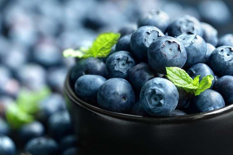 Blueberry antioxidant organic superfood in a bowl concept for he