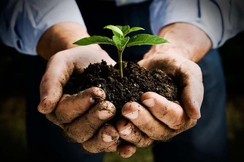 Farmer hand holding a fresh young plant. Symbol of new life and