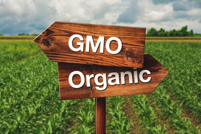 Gmo Or Organic Farming Direction Sign